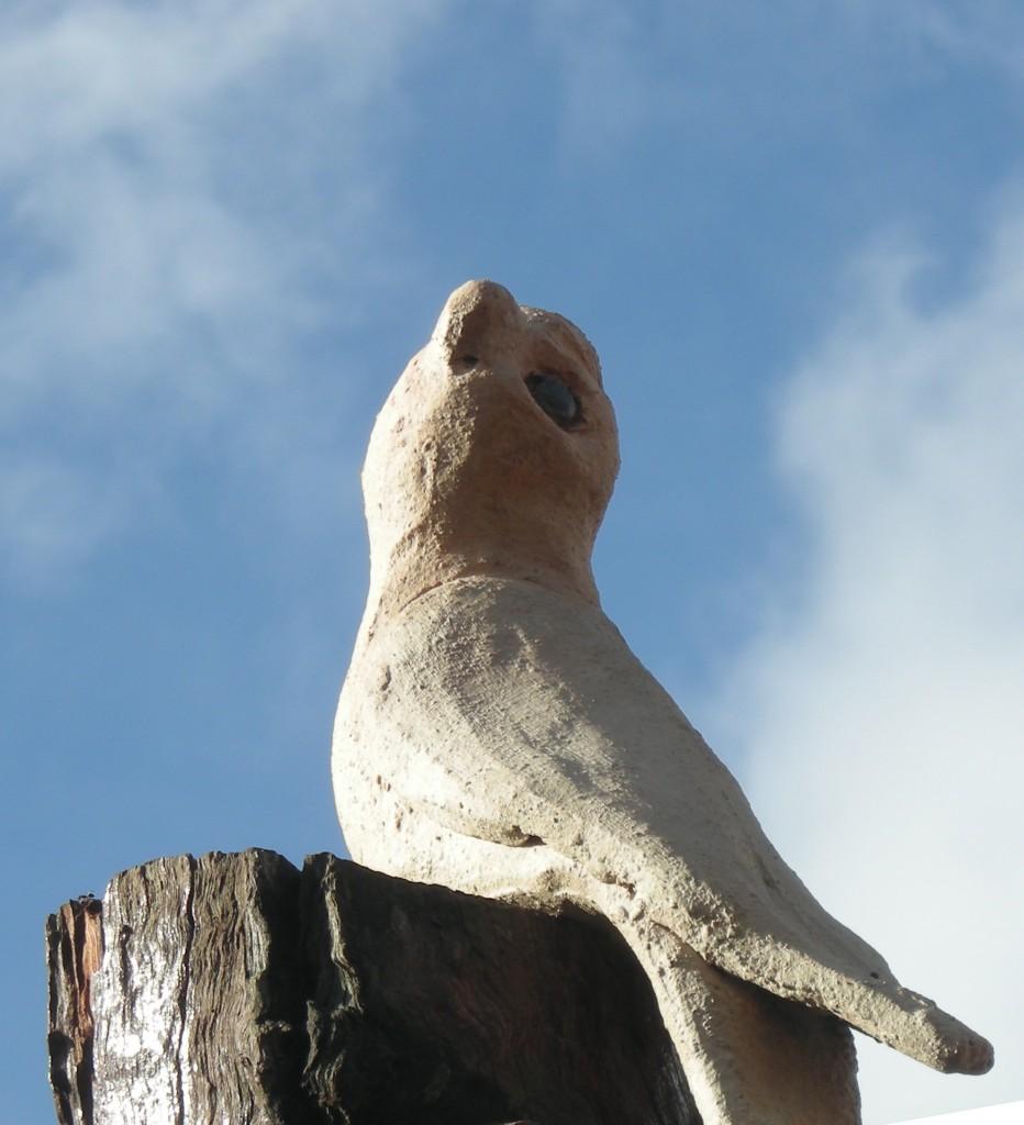habitat tree galah