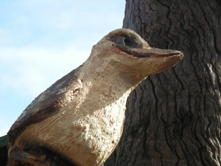 habitat tree kookaburraw